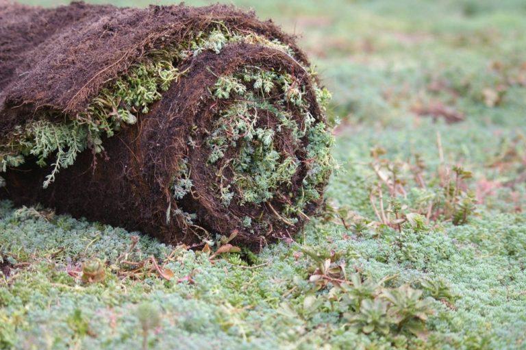 Растителен килим от седуми