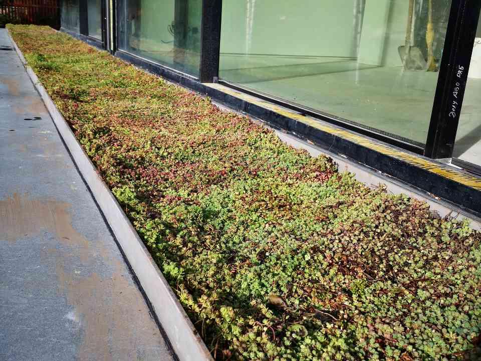 Лозен зелена тераса 4